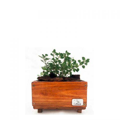 cultivarte_producto-MHC_mini-huerta-chica_inclusion-social_madera-reciclada